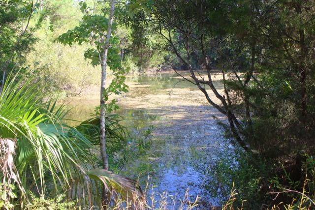 Pond at west side of property