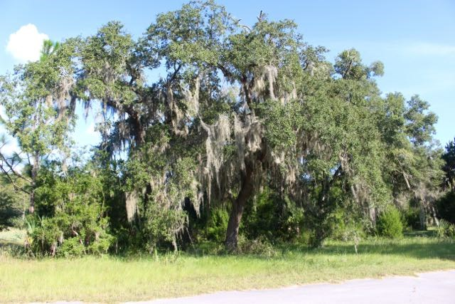 Big oaks on the property