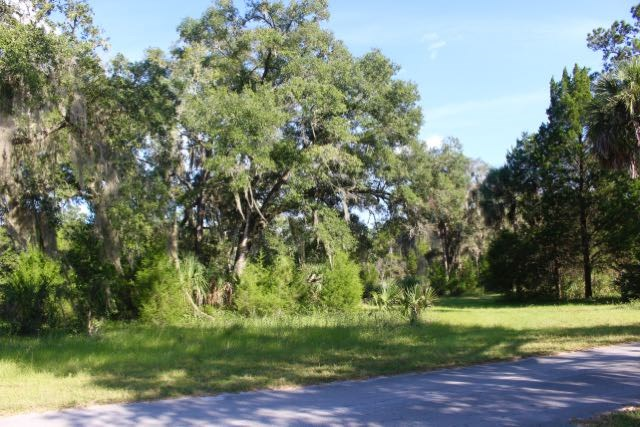 Big oak on the property